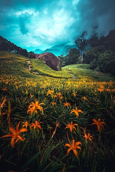 Vertikale des orangefarbenen lilienfeldes und ein bewölkter dunkler himmel