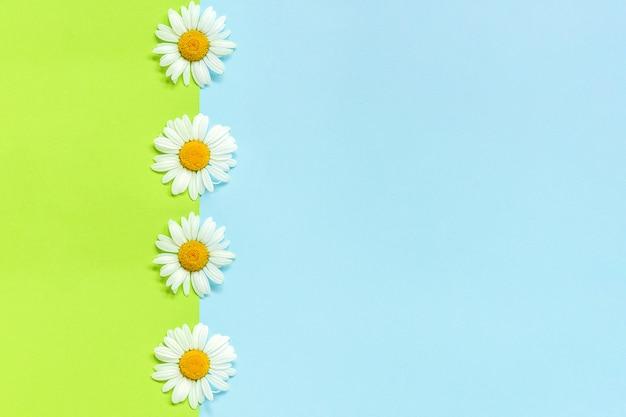 Vertikale linie kamillengänseblümchen blüht auf grünem und blauem hintergrund