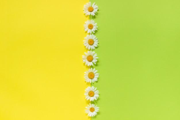 Vertikale linie kamillengänseblümchenblumen