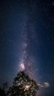 Vertikale milchstraße im sternenklaren nachthimmel mit mond hinter dem großen baum der silhouette