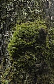 Vertikale nahaufnahmeaufnahme des moosigen baumstammes