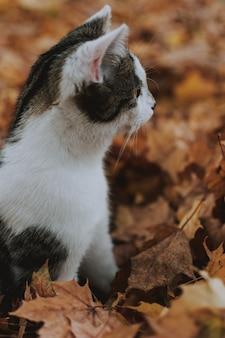 Vertikale nahaufnahmeaufnahme einer niedlichen weißen und grauen katze, die auf den gefallenen herbstahornblättern sitzt