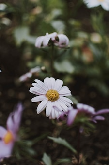 Vertikale selektive fokusaufnahme einer schönen weißen blume in einem garten