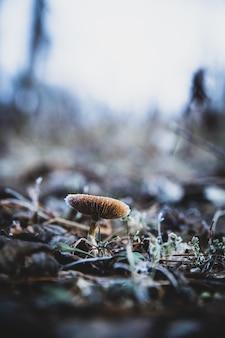 Vertikale selektive fokusaufnahme eines kleinen pilzes, der im boden wächst