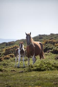 Vertikale selektive fokusaufnahme eines pferdes und eines ponys, die in einem feld stehen, das während des tages gefangen genommen wird