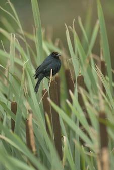 Vertikale selektive fokusaufnahme eines schönen kleinen schwarzen vogels, der unter den bambussen sitzt