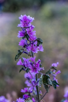 Vertikale selektive fokusaufnahme von exotischen lila blüten, die in einem wald aufgenommen wurden