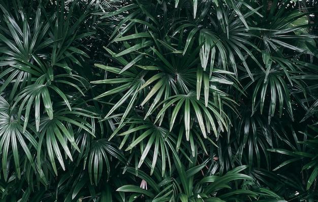 Vertikaler garten mit tropischem grünem blatt, dunkler ton