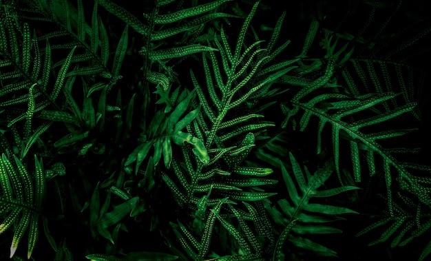Vertikaler garten mit tropischem grünem blatt, kontrast