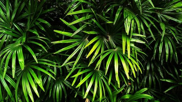 Vertikaler garten mit tropischem grünem blatt