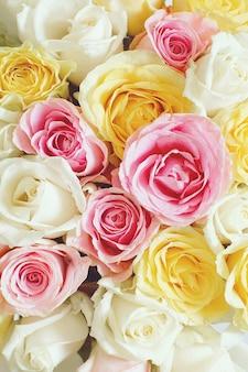 Vertikaler hintergrund mit schönen rosen von verschiedenen farben.