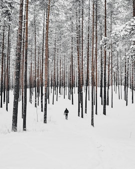 Vertikaler hochwinkelschuss einer person, die im verschneiten wald mit hohen bäumen geht