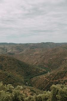 Vertikaler hochwinkelschuss einer reihe von bergen mit grünen bäumen unter dem bewölkten himmel