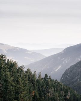 Vertikaler hochwinkelschuss eines waldes in den bergen mit dem weißen himmel im