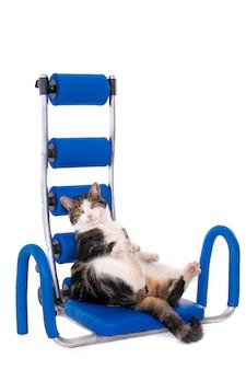 Vertikaler isolierter schuss einer katze, die ihren rücken auf einem bauchmuskeltrainer für knirschen ruht