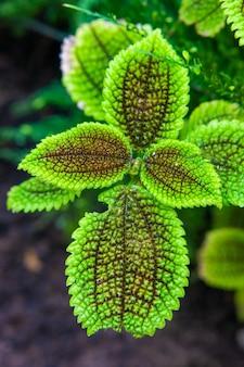 Vertikaler schuss der blätter einer grünen pflanze im garten