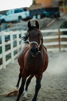 Vertikaler schuss des flachen fokus eines braunen pferdes, das ein geschirr trägt, das auf sandigem boden läuft