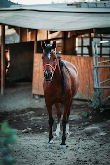 Vertikaler schuss des flachen fokus eines braunen pferdes, das ein rotes geschirr trägt