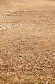 Vertikaler schuss des trockenen grases, das auf boden wächst