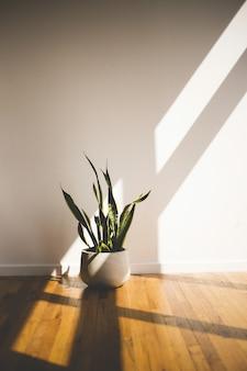 Vertikaler schuss einer grünen langblättrigen pflanze in einem weißen topf innerhalb eines raumes. ideal für eine raumdekoration