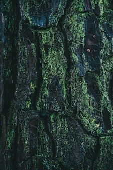 Vertikaler schuss einer mit moos bedeckten kiefernrinde