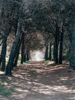 Vertikaler schuss einer schotterstraße, die durch die schönen bäume in einem wald geht