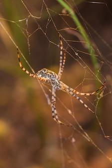 Vertikaler schuss einer spinne in ihrem netz.