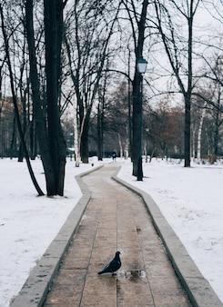 Vertikaler schuss einer taube, die auf einem weg steht, der im winter von bäumen umgeben ist