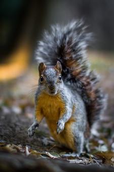 Vertikaler schuss eines eichhörnchens auf dem waldboden