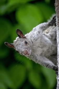 Vertikaler schuss eines entzückenden eichhörnchens auf einem baum im wald