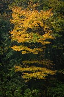 Vertikaler schuss eines gelben schönen baumes in einem grünen wald