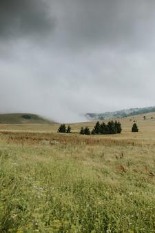 Vertikaler schuss eines grünen schönen baumes ohne leute an einem düsteren tag unter einem grauen himmel