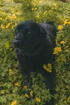Vertikaler schuss eines hundes, der auf dem boden liegt, umgeben von gelben blumen