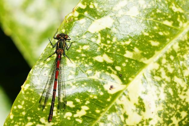 Vertikaler schuss eines insekts auf einem grünen blatt