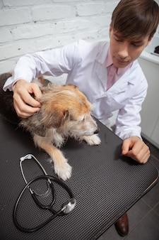 Vertikaler schuss eines männlichen tierarztes, der ängstlichen schutzhund vor der medizinischen untersuchung tröstet
