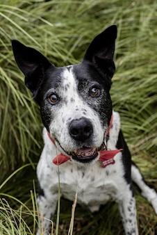 Vertikaler schuss eines niedlichen teddy roosevelt terrier-hundes, der auf dem gras sitzt