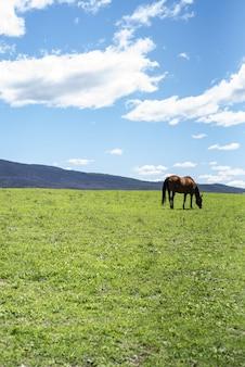 Vertikaler schuss eines pferdes, das auf einem grünen rasen an einem sonnigen tag weidet