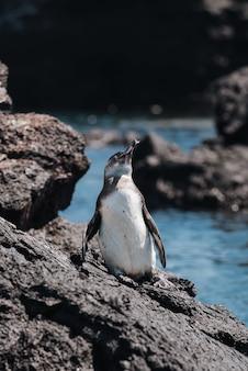 Vertikaler schuss eines pinguins auf dem stein