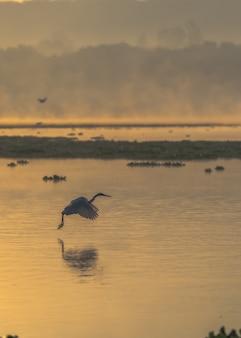 Vertikaler schuss eines vogels, der über dem meer während des sonnenuntergangs fliegt