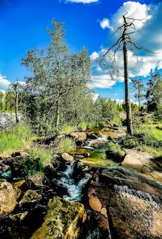 Vertikaler schuss eines wasserstroms, der in der mitte der felsen fließt, umgeben von natur in schweden