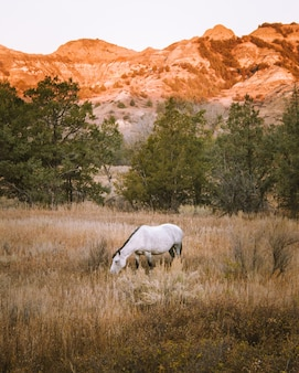 Vertikaler schuss eines weißen pferdes in einem trockenen grasfeld mit einem berg im hintergrund