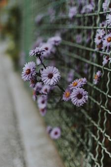Vertikaler schuss einiger kleiner lila blumen auf einem zaun