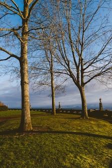 Vertikaler schuss von drei bäumen auf dem gras unter dem sonnenuntergangslicht