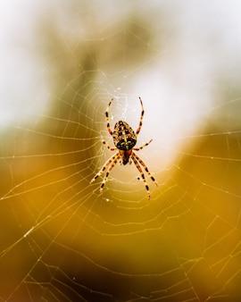 Vertikaler selektiver fokus makroaufnahme einer spinne im spinnennetz
