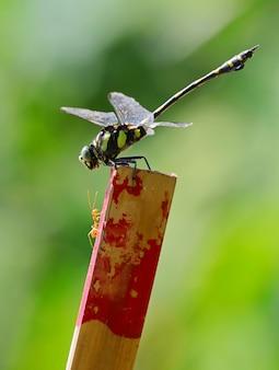 Vertikaler selektiver fokusschuss eines grünen insekts, das versucht, sein opfer zu fangen