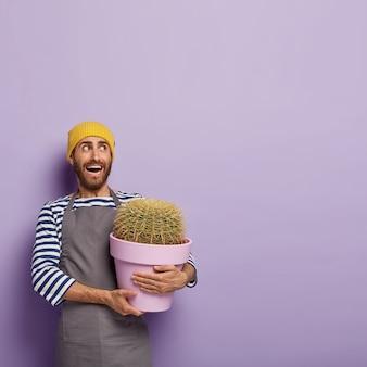 Vertikales bild des emotionalen unrasierten mannes schaut zur seite, hält topfpflanze im topf, kümmert sich um kaktus, trägt gelben hut, gestreiften pullover und schürze