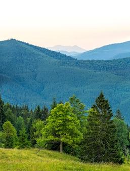 Vertikales bild des schönen grünen waldes und der blauen berge. karpaten am abend