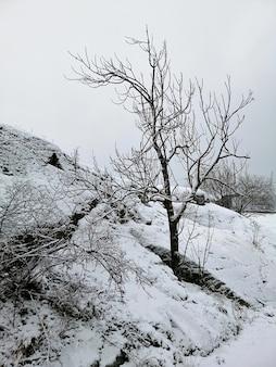 Vertikales bild von bäumen in einem wald, der im schnee in larvik in norwegen bedeckt ist
