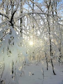 Vertikales bild von bäumen in einem wald, der im schnee unter dem sonnenlicht in larvik in norwegen bedeckt ist