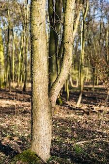 Vertikales bild von bäumen in einem wald unter dem sonnenlicht